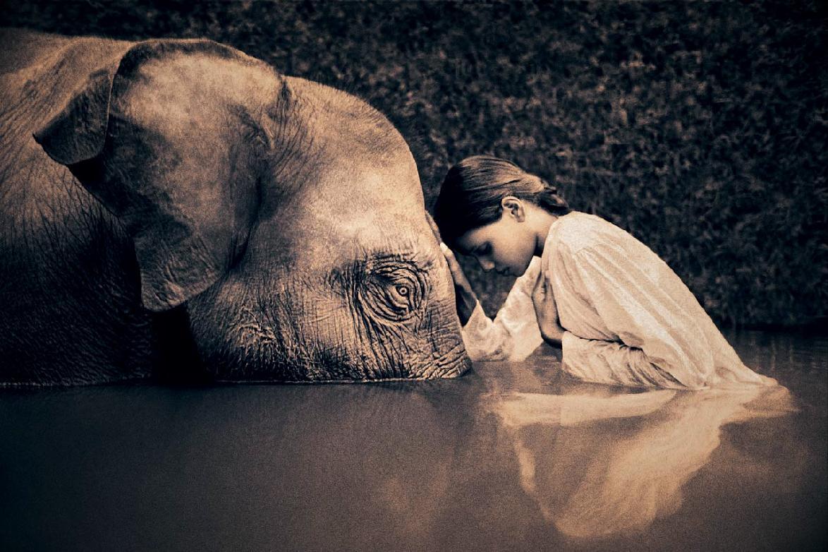 elefante santuario
